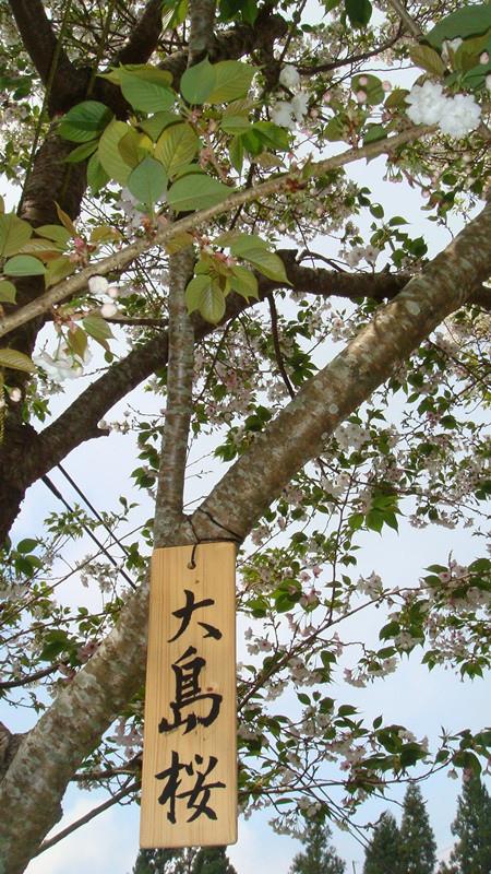 DSC04154_副本.jpg