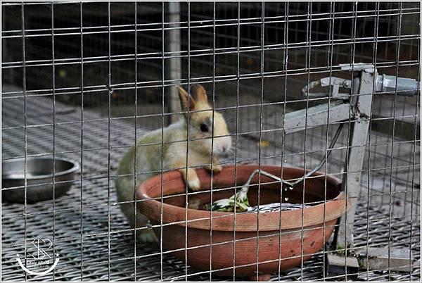 A.maze兔子迷宮景觀咖啡餐廳 (83)