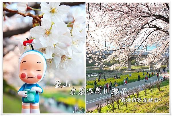 釜山東萊溫泉川櫻花 (1)