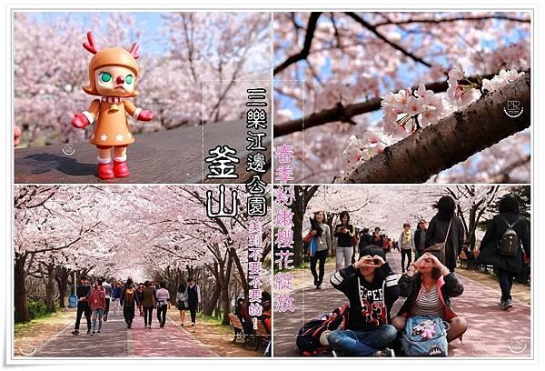 釜山三樂江邊公園櫻花 (1)