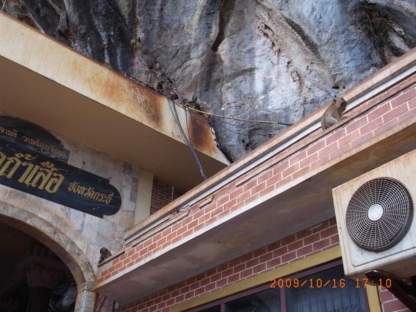 tiger cave屋簷上的獼猴