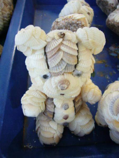 很多貝殼的紀念品