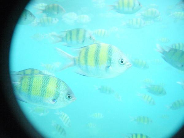 不過魚的種類不多…或者是說…其他魚都被餵飽了