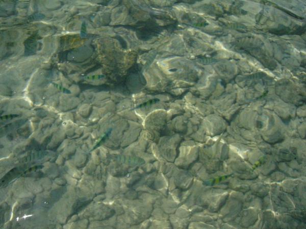 沙灘另外一邊…魚比較多