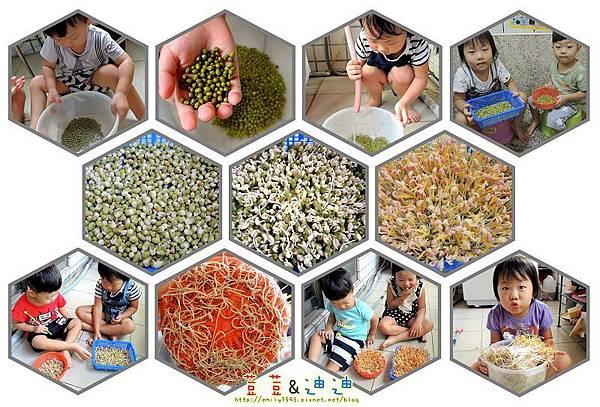 種豆芽菜.jpg