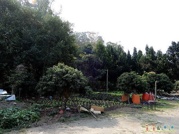 DSCN6063.jpg
