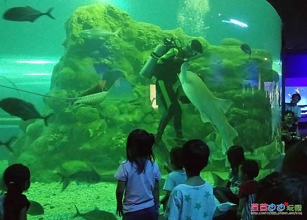 澎湖水族館 (3).jpg