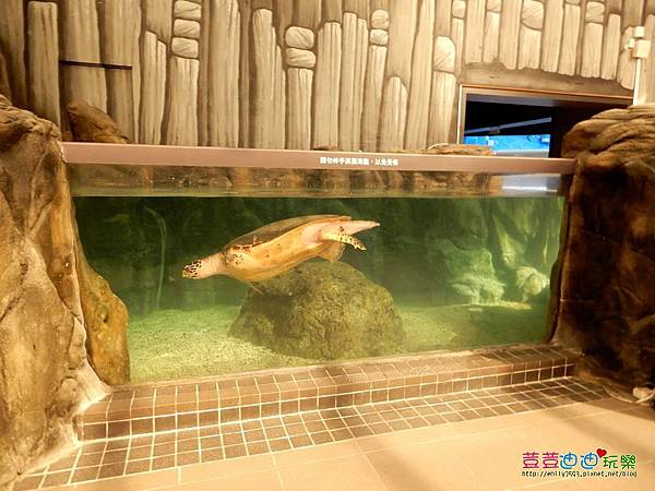 澎湖水族館 (28).jpg
