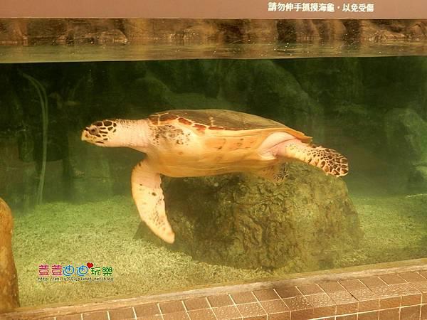 澎湖水族館 (29).jpg