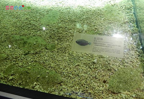 澎湖水族館 (35).jpg