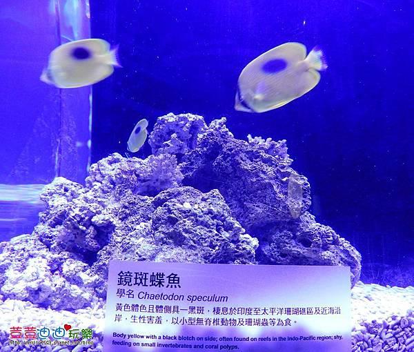 澎湖水族館 (33).jpg