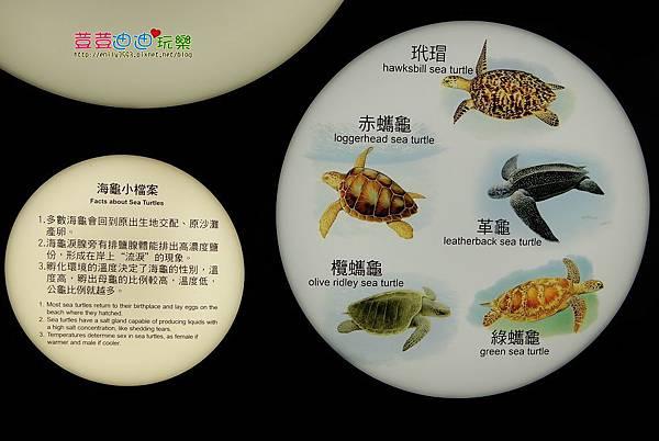 澎湖水族館 (43).jpg