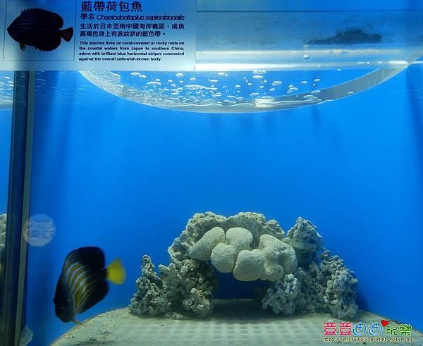 澎湖水族館 (39).jpg