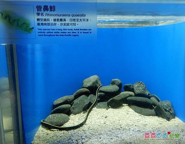 澎湖水族館 (40).jpg