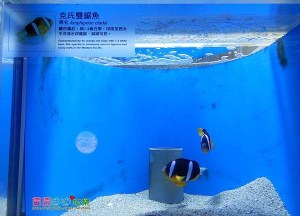 澎湖水族館 (38).jpg