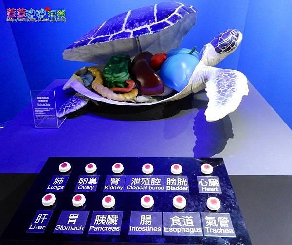 澎湖水族館 (44).jpg