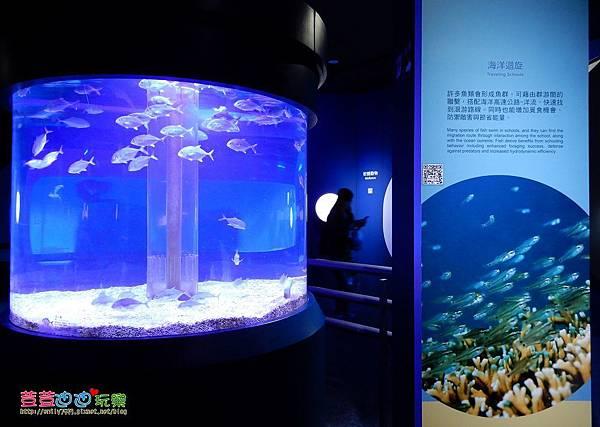 澎湖水族館 (45).jpg