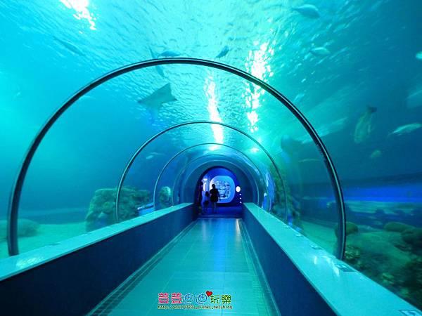 澎湖水族館 (47).jpg