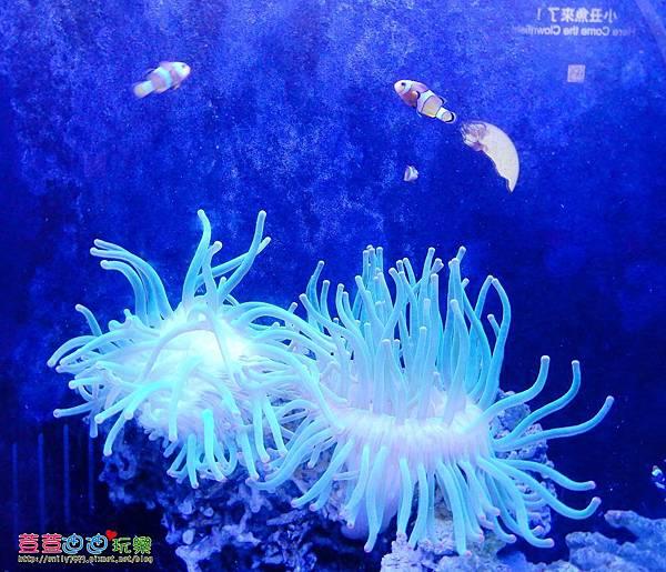 澎湖水族館 (59).jpg