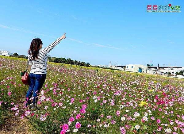 和美花海田 (17).jpg