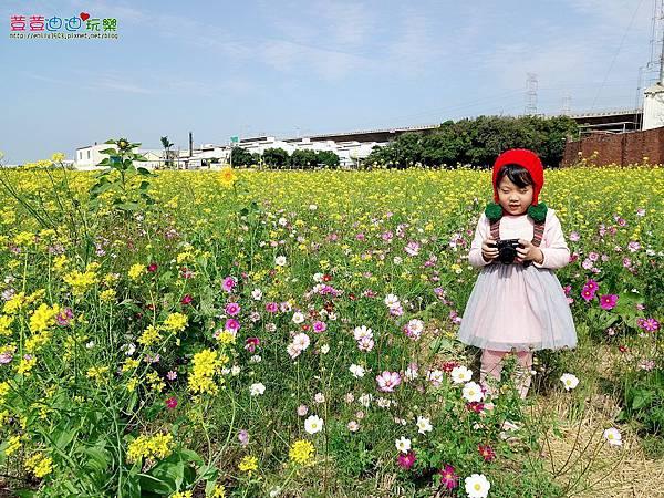 和美花海田 (32).jpg