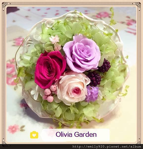 olivia garden 紫.jpg
