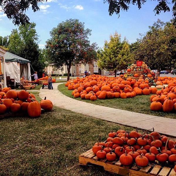 Halloween campus.jpg