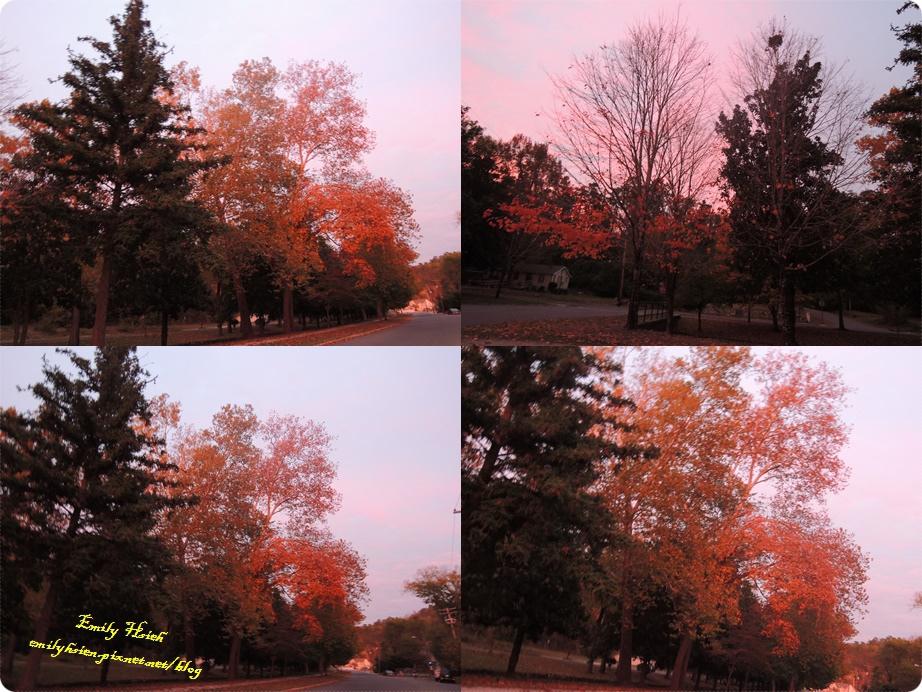 Foliage1.jpg