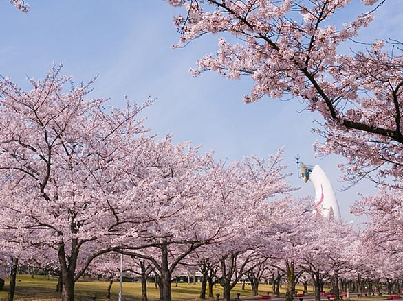 大阪萬博紀念公園