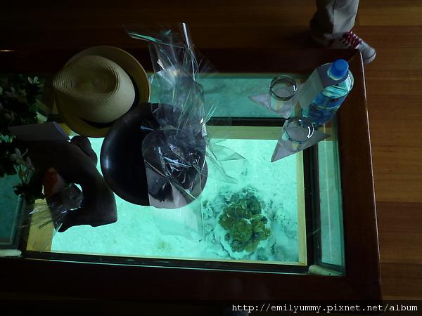 客廳的玻璃桌子可看到海底的珊瑚礁