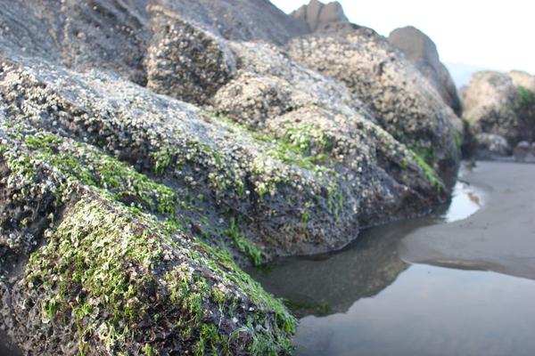 岩石有海草喔!