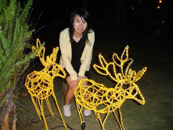 晚上縻鹿出來了!