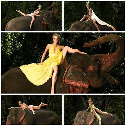 11.泰國大象