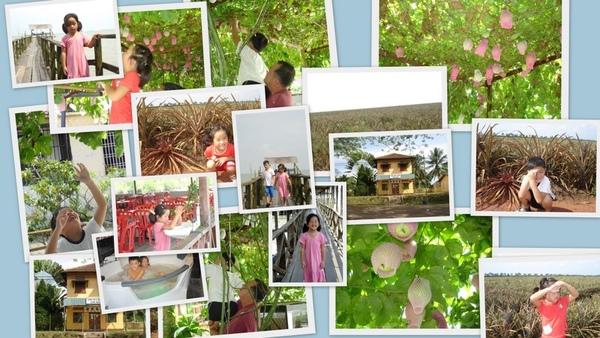果園2.jpg