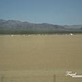 美國Day3白天(25)沙漠中的活動~猜猜是什麼~