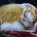 美國Day5(45)唯一買到的紀念品~~超可愛小貓~~.jpg