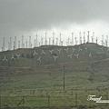 美國Day5(67)滿山的風力發電車@@~~.jpg