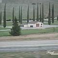 美國Day5(68)尖尖的樹~~童話裡有看過~XD~.jpg