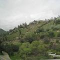 美國Day5(69)看到這景色~才明瞭真的有圓圓的樹!!以前只能在童話或畫裡裡看見XD~.jpg