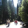 美國Day6(59)走在這樣的樹林裡真的很讚!!.jpg