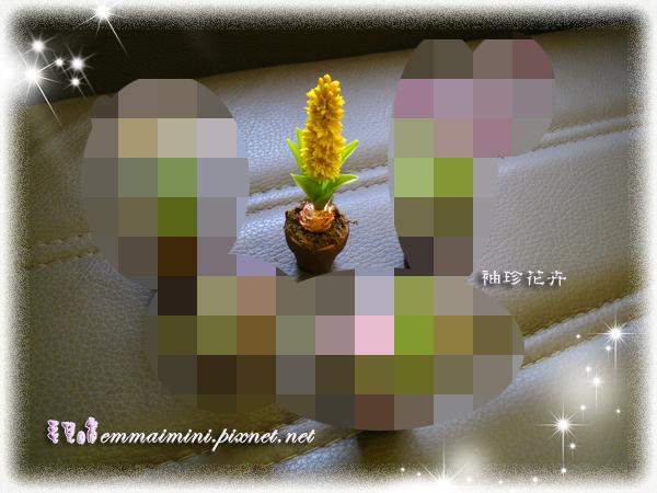 袖珍花卉-風信子