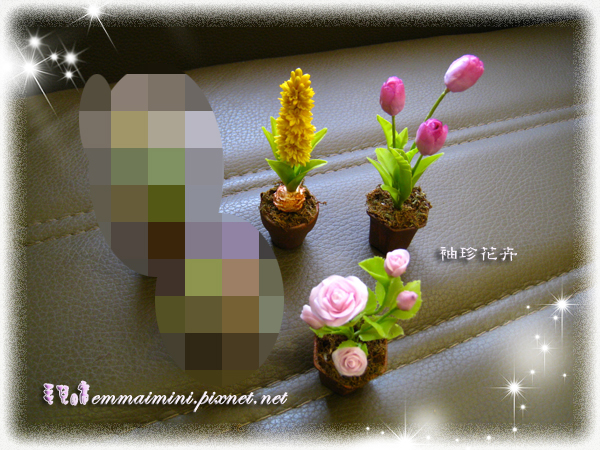 袖珍花卉-玫瑰