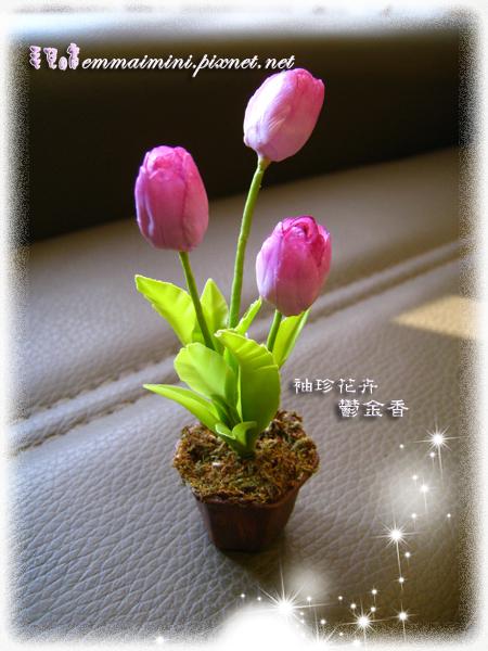 袖珍鬱金香(高10公分,花盆直徑約2.7公分)