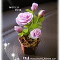 袖珍玫瑰(高7公分,花盆直徑約2.7公分)