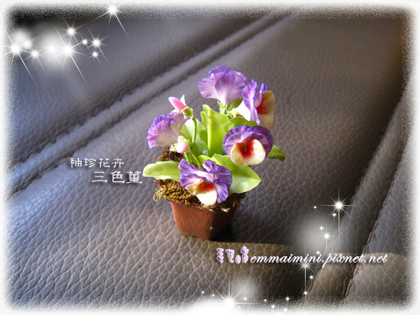 袖珍三色菫