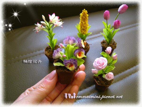 袖珍花卉尺寸對照
