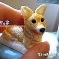 2011/1袖珍寶貝狗