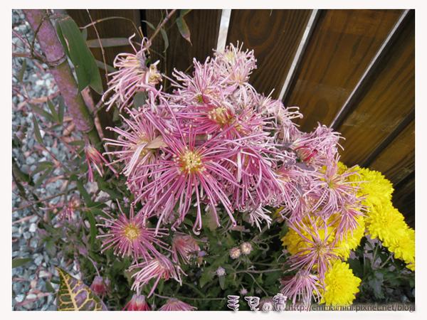 圓山公園區-真相館外的路邊小花