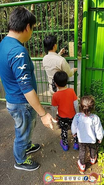 【六福村der環尾狐猴】
