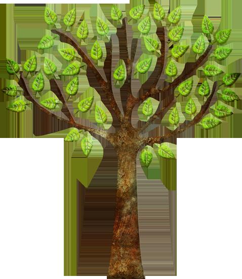 IGEIS_CinqueTerre_tree-72
